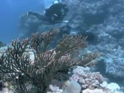 Explore Great Barrier Reef... with Google